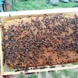 Пчелопакеты, пчелосемьи, Сочи